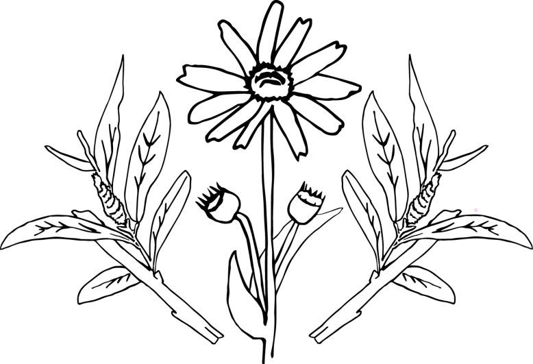 willowandarnica